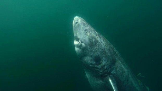 Καρχαρίας καταδιώκει σέρφερ (VIDEO)
