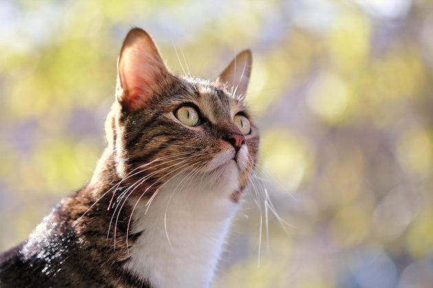 Βασανισμός γάτας με ψαροντούφεκο στην Καρδίτσα