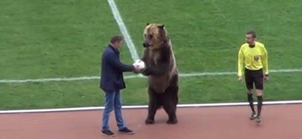 Μία... αρκούδα έδωσε την μπάλα στον διαιτητή για να αρχίσει αγώνας στη Ρωσία! (VIDEO)