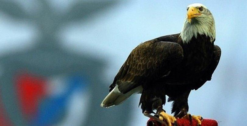 Την... κοπάνησε για μια ημέρα ο αετός της Μπενφίκα (VIDEO)