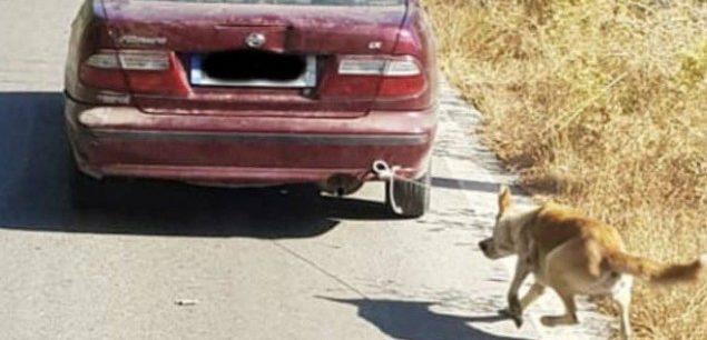 Συνελήφθη ο οδηγός που έσερνε τον σκύλο πίσω από το αυτοκίνητο
