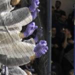 Επικό «τρολάρισμα»: Με ολόσωμες στολές κατά του κορωνοϊού οι οπαδοί του Ηρακλή! (ΦΩΤΟ)