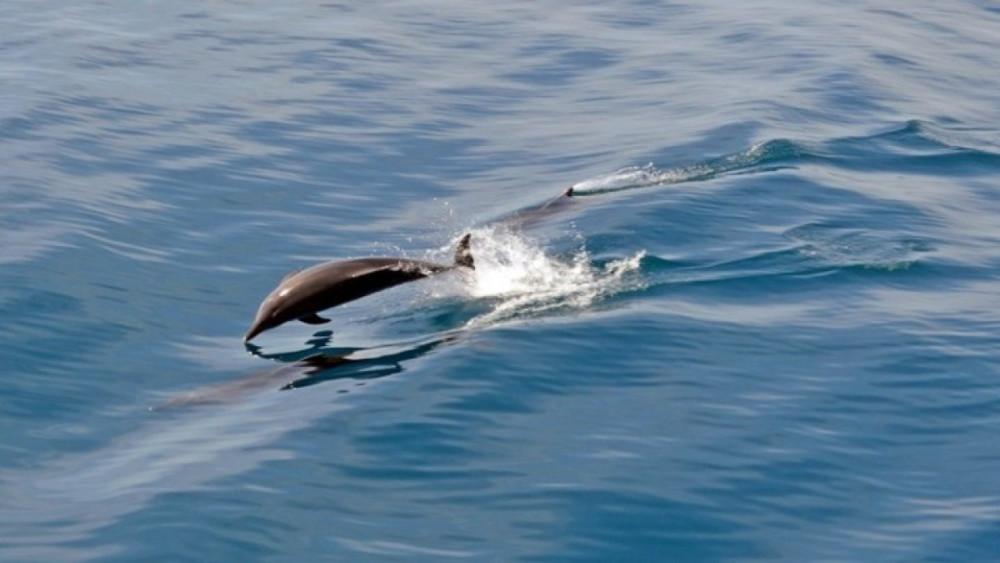 Εμφανίστηκαν και πάλι δελφίνια στο αρχαίο λιμάνι της Κορίνθου