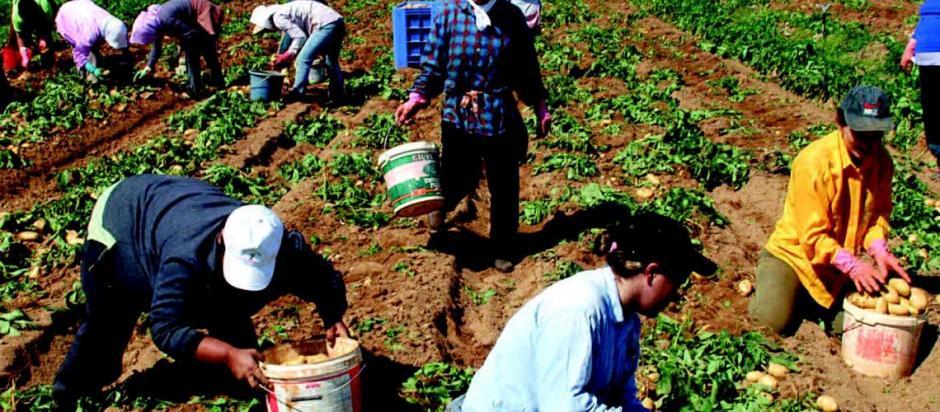 Ελλάδα - Μακεδονία: Ζητούν την άμεση έλευση 7.000 εργατών γης από την Αλβανία