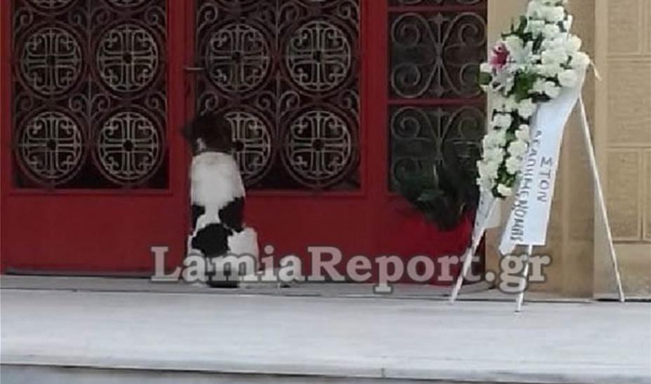 «Ραγίζει» καρδιές ο σκύλος που συνόδευσε το αφεντικό του στον τάφο στη Φθιώτιδα (ΦΩΤΟ-VIDEO)