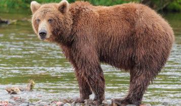 Καστοριά: Νεαρός άνδρας πάλεψε με αρκούδα και νοσηλεύεται με βαριά τραύματα