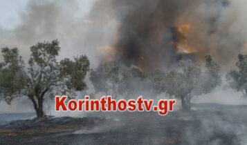 Μεγάλη φωτιά στις Κεχριές Κορινθίας: Εκκενώθηκαν οικισμοί και κατασκήνωση (VIDEO)