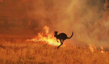 WWF: 3 εκ. ζώα σκοτώθηκαν ή εκτοπίστηκαν