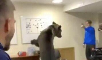 Αρκούδα σπέρνει τον πανικό μέσα στα αποδυτήρια ρωσικής ομάδας (VIDEO)