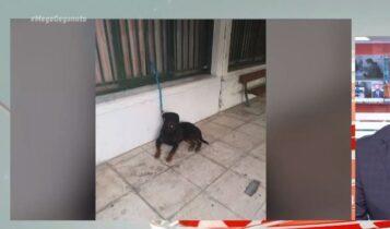 Νέα Φιλαδέλφεια: Ληστές χρησιμοποιούσαν σκυλί στις επιθέσεις τους! (VIDEO)