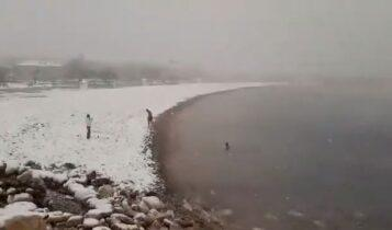 Κακοκαιρία «Μήδεια»: Βουτιές στη χιονισμένη Γλυφάδα! (VIDEO)
