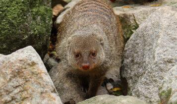 Κορωνοϊός: Σε εκτροφεία άγριων ζώων στην Κίνα εντοπίζει ειδικός του ΠΟΥ την πηγή προέλευσής του