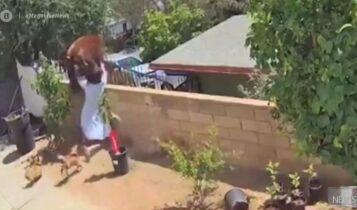 ΗΠΑ: 17χρονη πάλεψε με αρκούδα για να σώσει τα σκυλιά της (VIDEO)