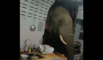 Ταϊλάνδη: Ελέφαντας εισβάλει σε σπίτι και ψάχνει για τροφή (VIDEO)