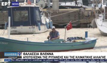 Θαλάσσια βλέννα: Απο τις ακτές του Μαρμαρά έφτασε στη Λήμνο (VIDEO)
