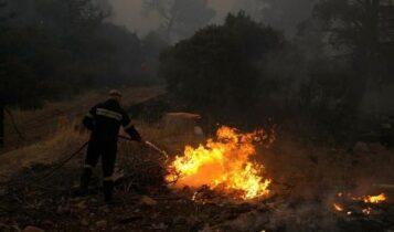 Πυρκαγιά στα Βίλια: Μάχη κοντά στους οικισμούς Οινόη και Πανόραμα (VIDEO)