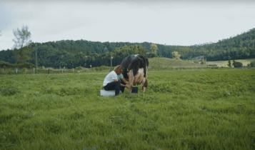 Ο Τσιτσιπάς αρμέγει αγελάδα στις Αζόρες (VIDEO)